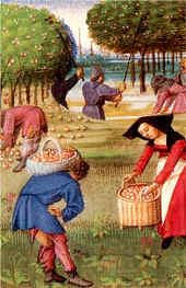 Cueillettes des pommes, in le Rustican (1460), Pierre de Crescens - Musée Condé - Chantilly