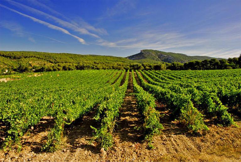 Вина Кассиса (Cassis), Прованс: сорта винограда, карта виноделен